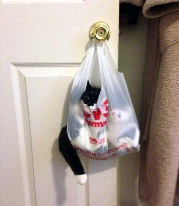 curious-cats (8)