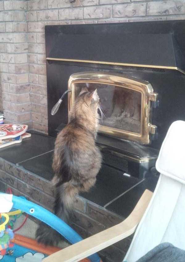 curious-cats (9)