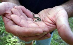 Adorably Cute Snakes (32 photos) 10