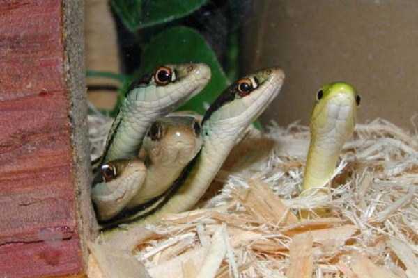 cute-snakes (13)