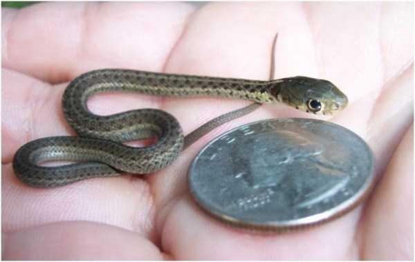 cute-snakes (17)