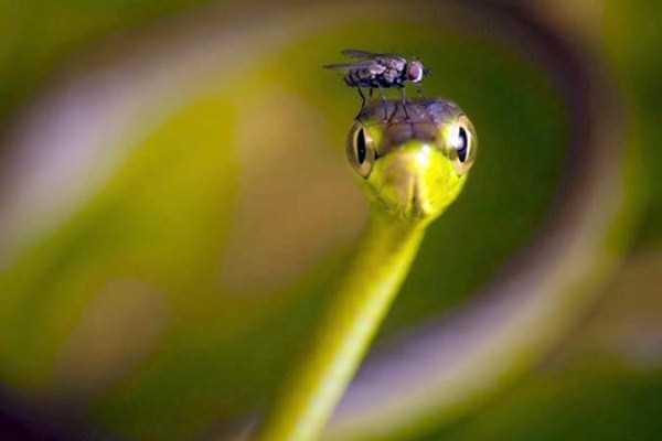 cute-snakes (18)
