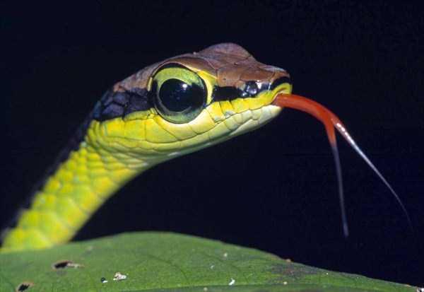 cute-snakes (20)