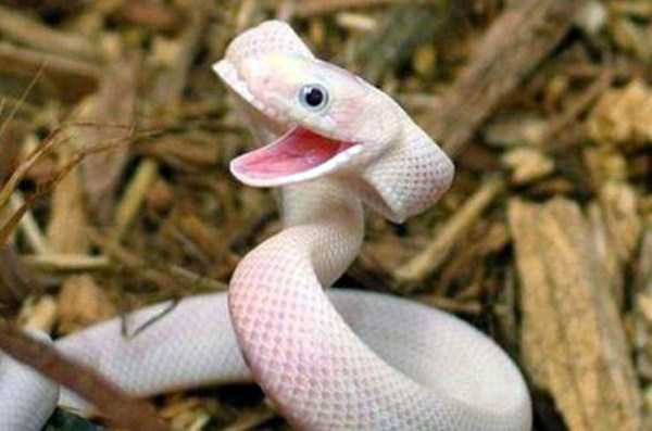 cute-snakes (21)