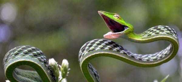 cute-snakes (24)