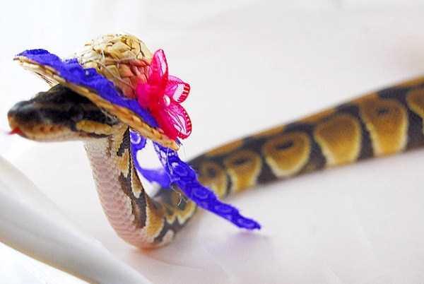 cute-snakes (25)