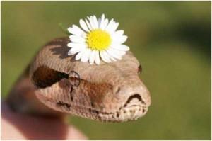 Adorably Cute Snakes (32 photos) 27