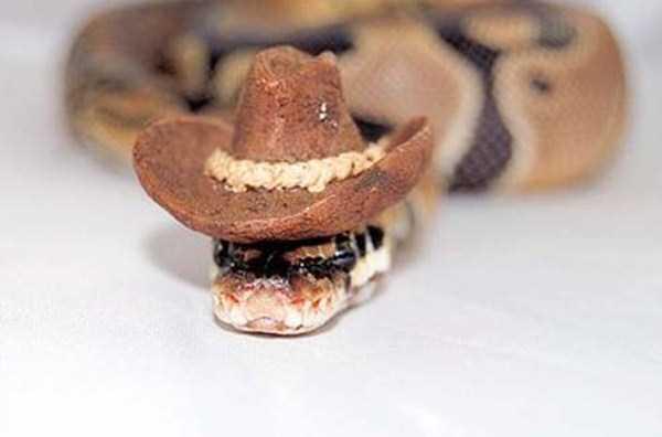 cute-snakes (28)