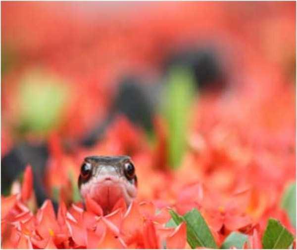cute-snakes (29)
