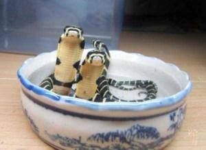 Adorably Cute Snakes (32 photos) 30