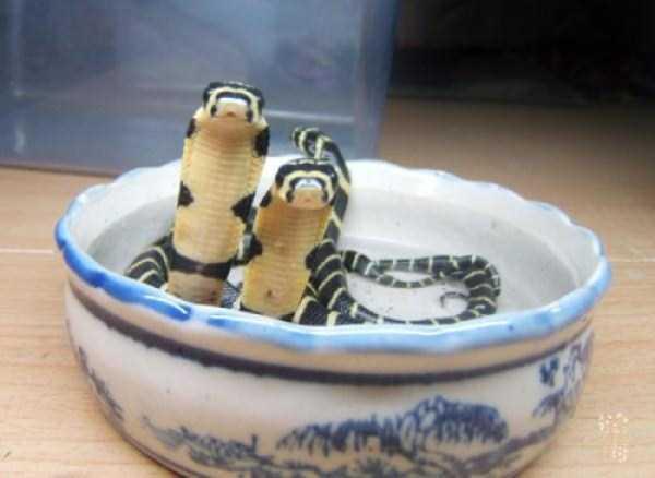 cute-snakes (30)