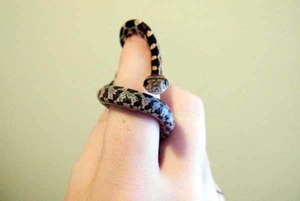 cute-snakes (31)