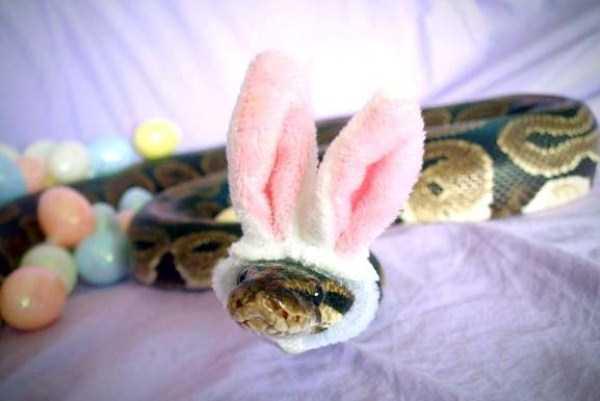cute-snakes (32)
