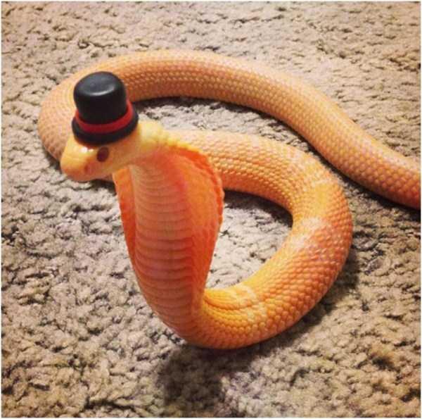 cute-snakes (5)