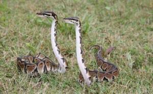 Adorably Cute Snakes (32 photos) 6
