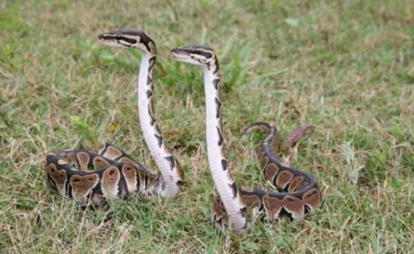 cute-snakes (6)