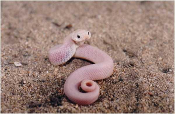 cute-snakes (7)