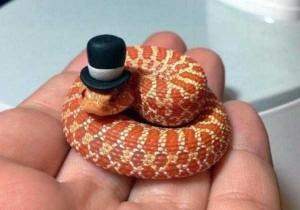 Adorably Cute Snakes (32 photos) 9
