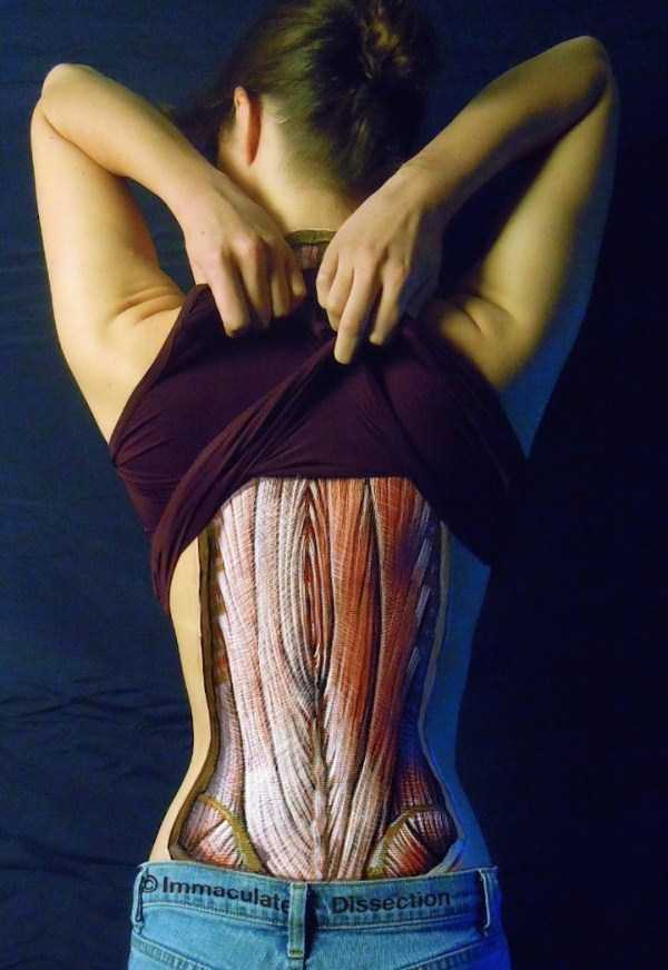 danny-quirk-anatomical-paintings (8)