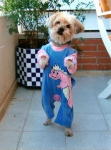 Dogs in Pijamas are Ridiculously Cute (24 photos) 1