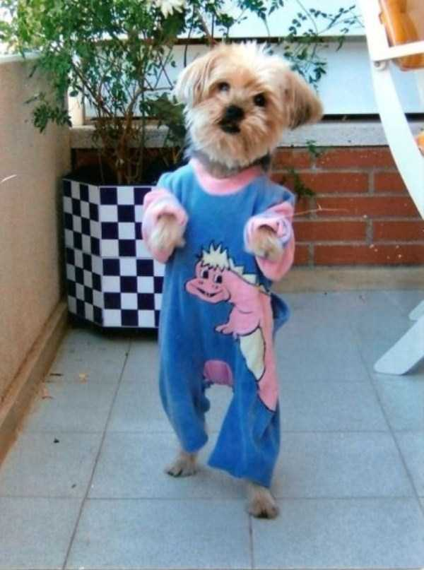 dogs-wearing-pijamas (1)