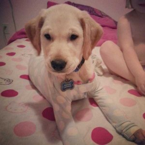 Dogs in Pijamas are Ridiculously Cute (24 photos) 10