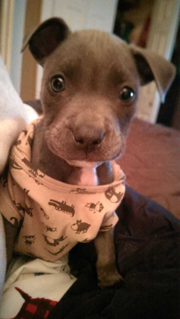 dogs-wearing-pijamas (11)