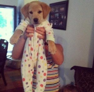 Dogs in Pijamas are Ridiculously Cute (24 photos) 14