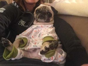 Dogs in Pijamas are Ridiculously Cute (24 photos) 15
