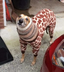 Dogs in Pijamas are Ridiculously Cute (24 photos) 16