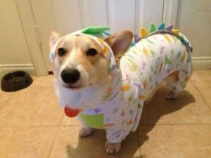 Dogs in Pijamas are Ridiculously Cute (24 photos) 17