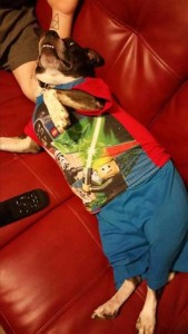 Dogs in Pijamas are Ridiculously Cute (24 photos) 18