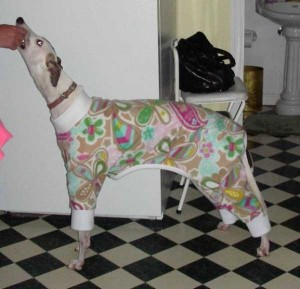 Dogs in Pijamas are Ridiculously Cute (24 photos) 2