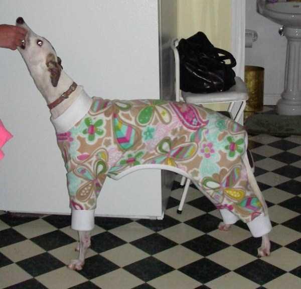 dogs-wearing-pijamas (2)