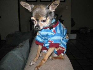 Dogs in Pijamas are Ridiculously Cute (24 photos) 20