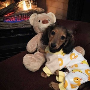Dogs in Pijamas are Ridiculously Cute (24 photos) 22