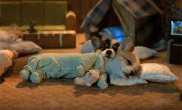 dogs-wearing-pijamas (24)