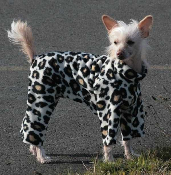 dogs-wearing-pijamas (3)