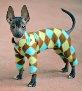 Dogs in Pijamas are Ridiculously Cute (24 photos) 4