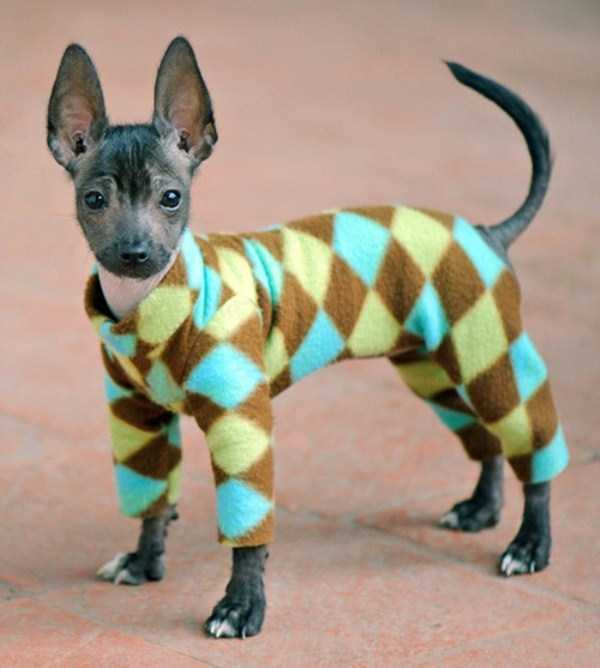 dogs-wearing-pijamas (4)