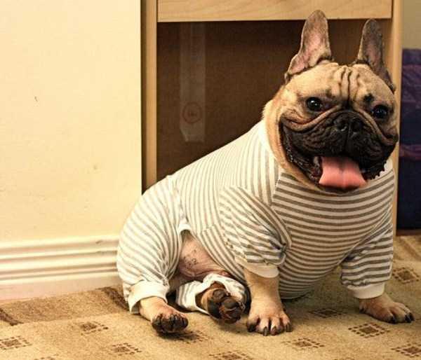 dogs-wearing-pijamas (6)