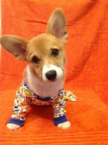 Dogs in Pijamas are Ridiculously Cute (24 photos) 7