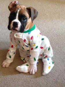 Dogs in Pijamas are Ridiculously Cute (24 photos) 8