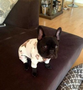 Dogs in Pijamas are Ridiculously Cute (24 photos) 9