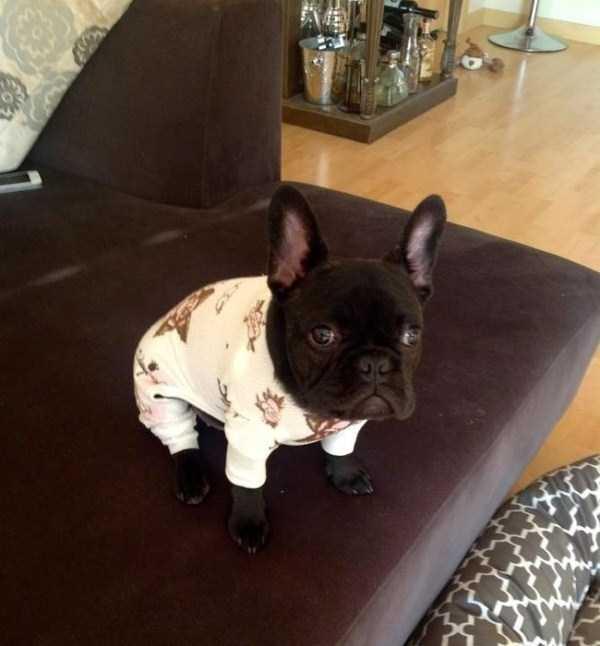 dogs-wearing-pijamas (9)