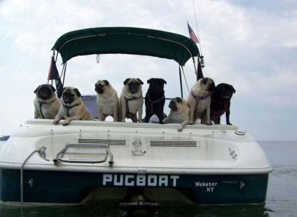 funny-boat-names (11)