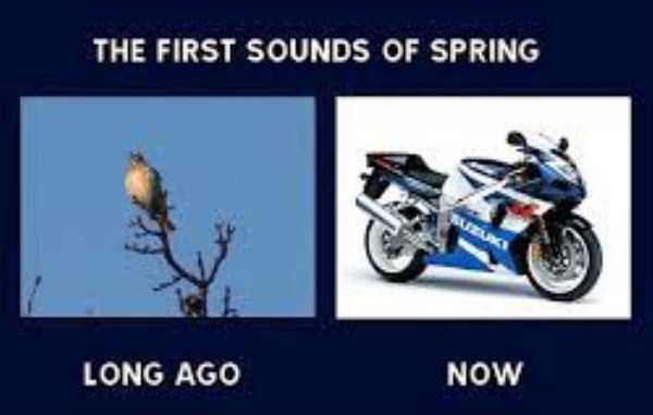 funny-spring-photos (10)