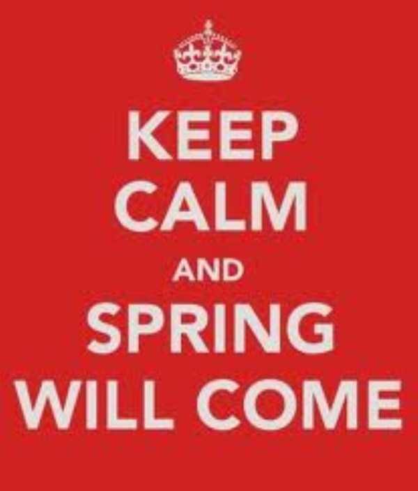 funny-spring-photos (11)