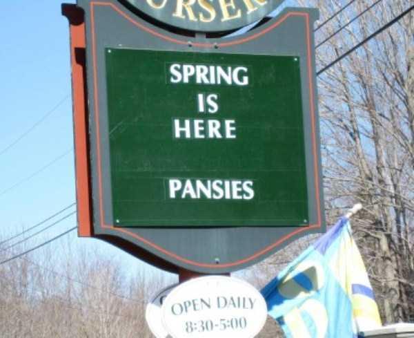 funny-spring-photos (21)