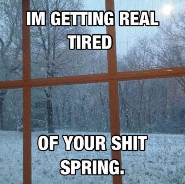 funny-spring-photos (26)